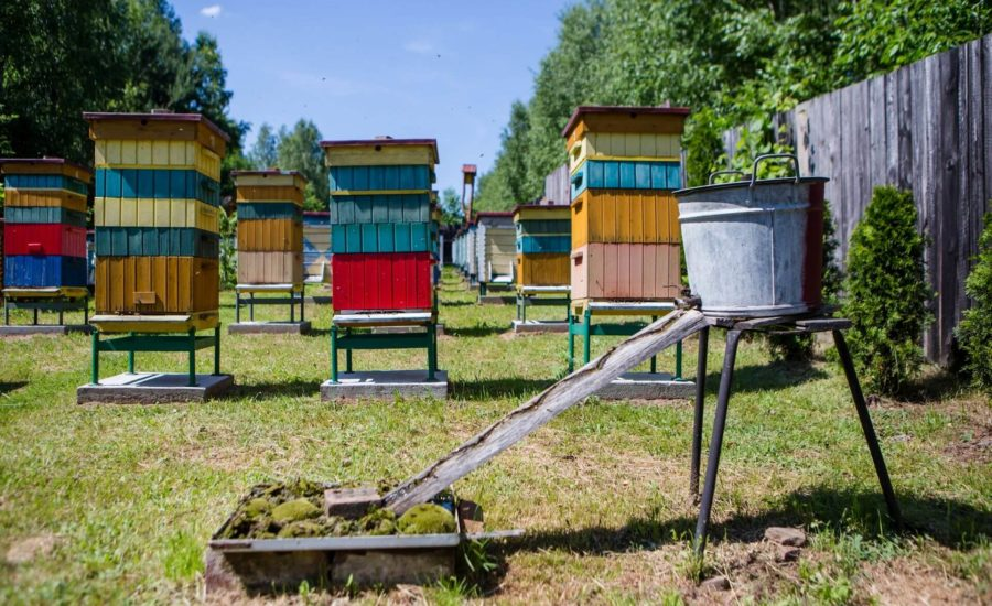 VISITING THE APIARY AND HONEY